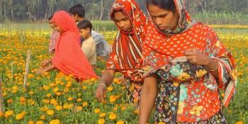 Jhenaidah-Flower