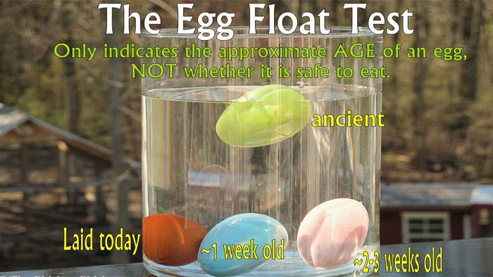 egg-float