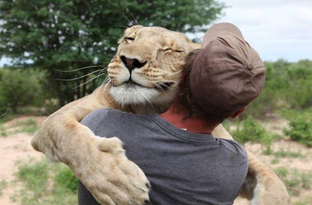 34087-lion126115