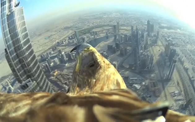 eagle_3_3232712k