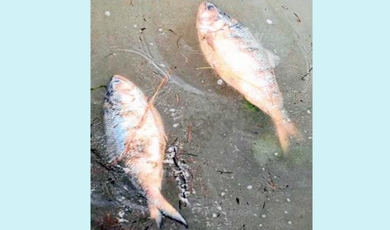 Fish1435130905