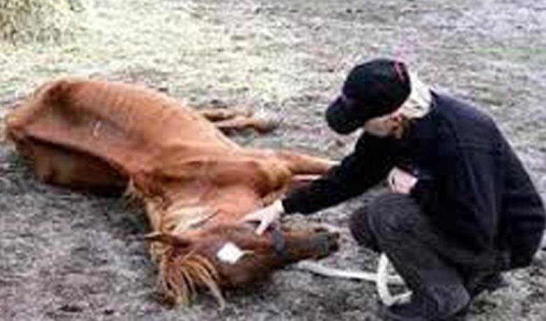 Horse1433392110