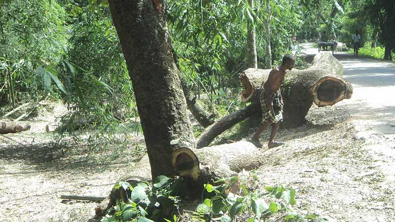 KURIGRAM-ROAD-TREE-BM