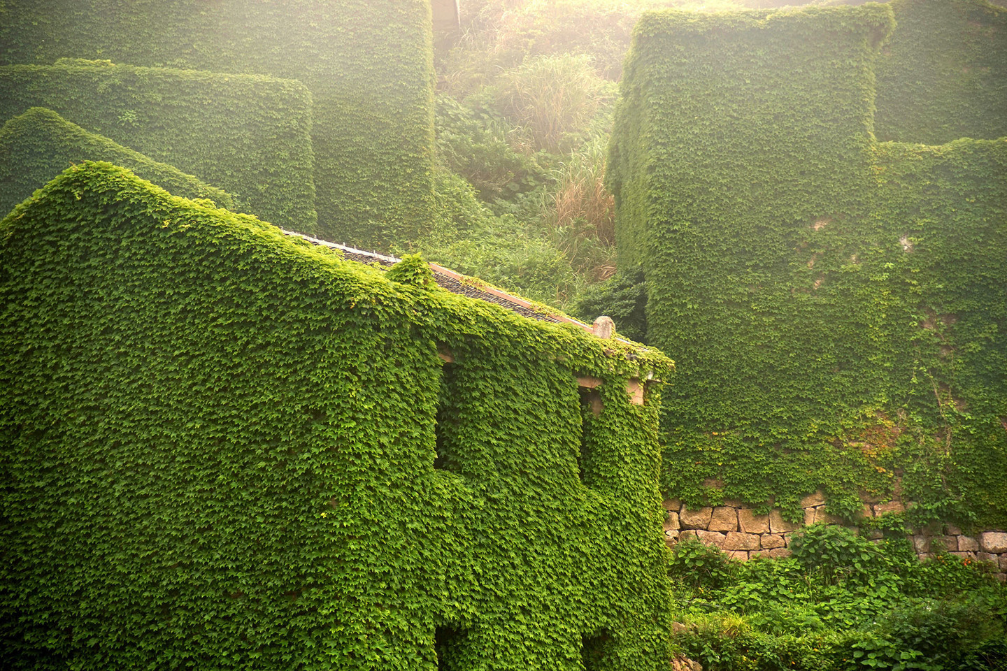 ZHOUSHAN, CHINA - MAY 31:  (CHINA OUT) Houses are covered with creepers at a deserted village on Shengshan Island on May 31, 2015 in Zhoushan, China.  (Photo by ChinaFotoPress/ChinaFotoPress via Getty Images)