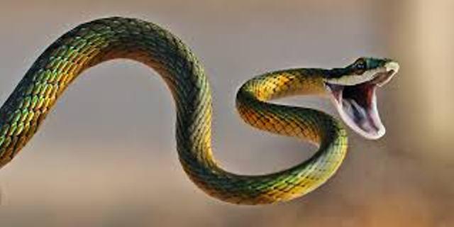 snake_0
