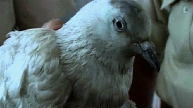 spy_pigeon_640x360_bbc_nocredit