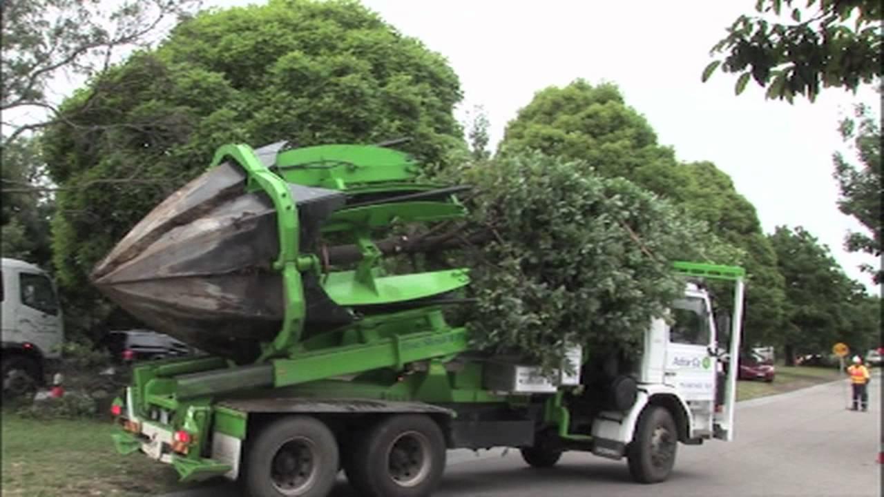 tree relocation