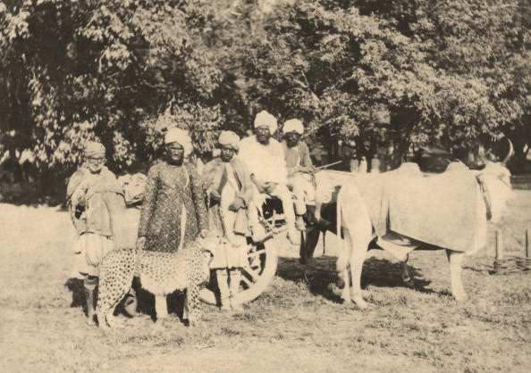 1880-Nawabs-circus-party-