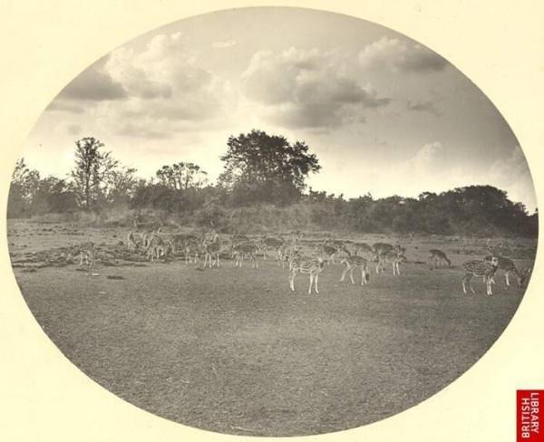 1904-Deer-park-of-Nawabs-Shahbag-
