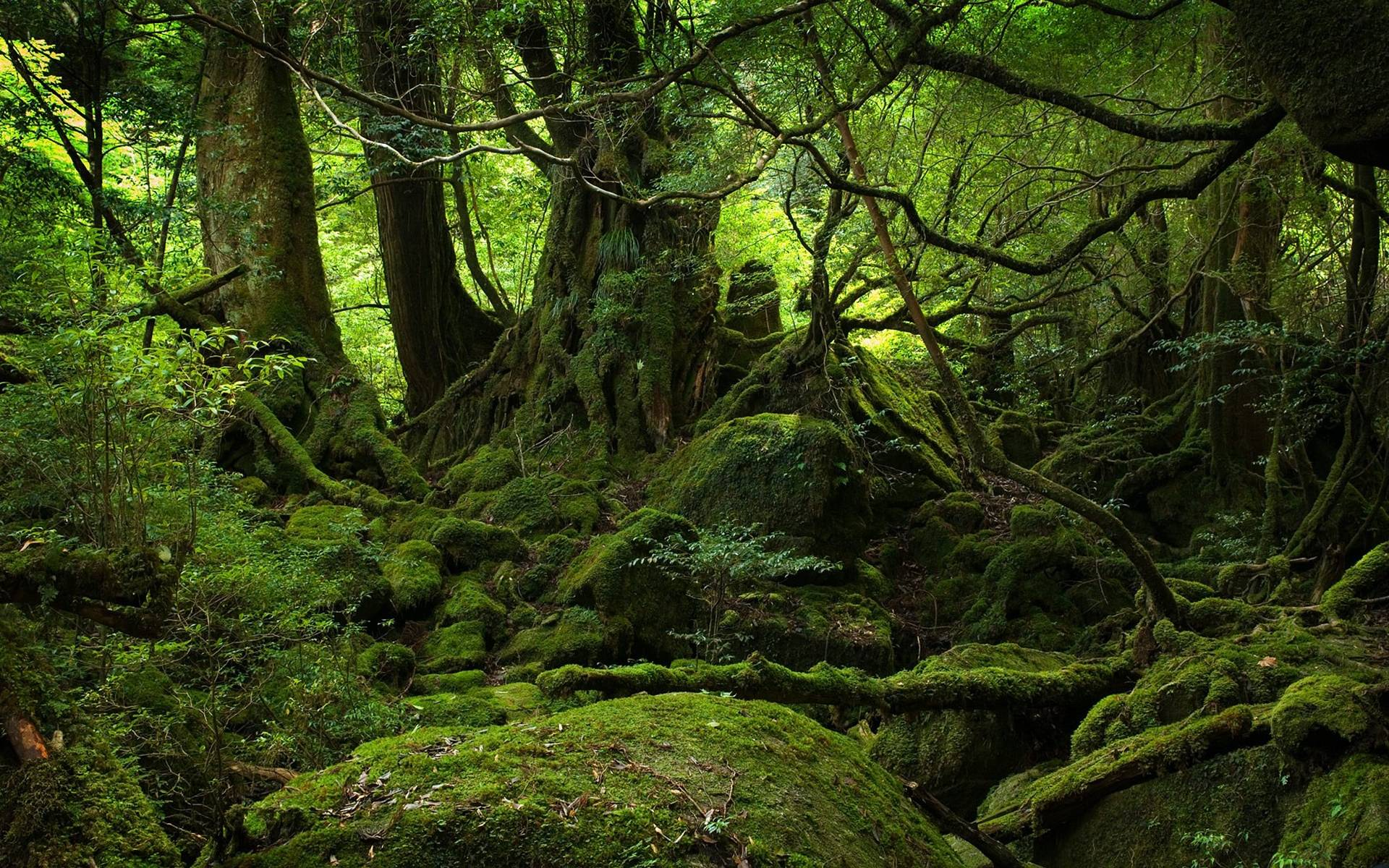 Aokigahara-Forest-Japan