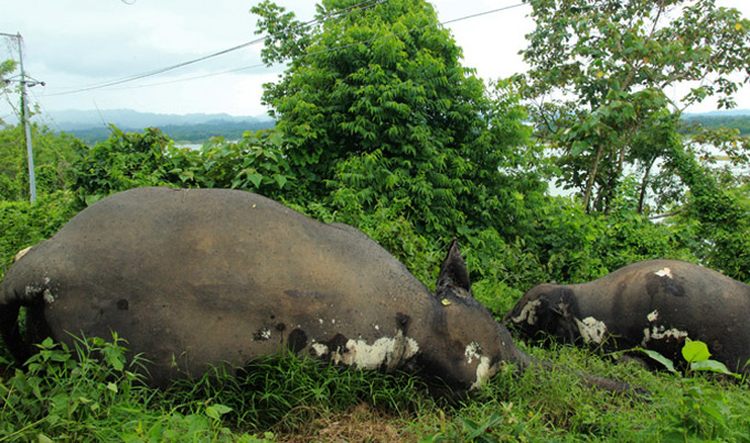 Rangamati-hati-pic-02-07-15