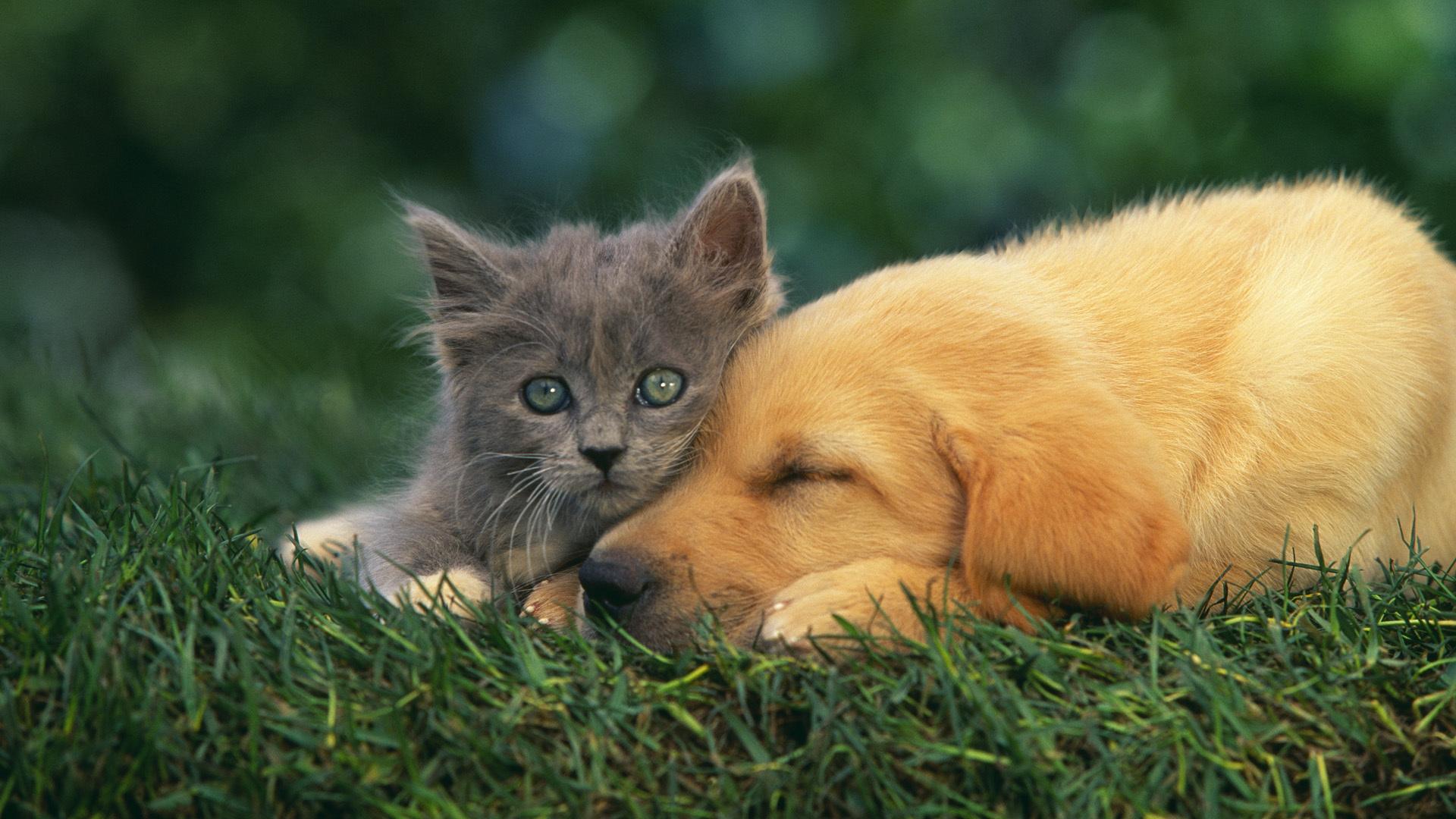 kitty-wallpaper-cat-dog-friends-grass