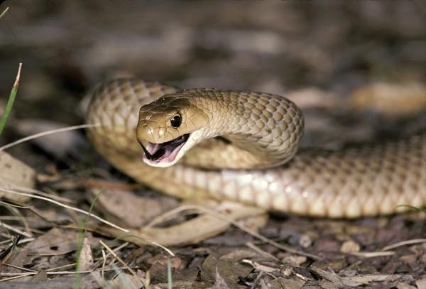 sn-snakebite