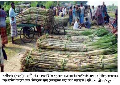 Picture Raninagar (Sugarcane) 12.08.2015