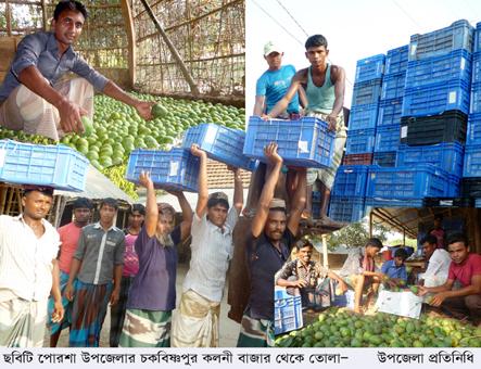 Salauddin mango news (1)fw