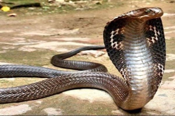 image_259915.snake