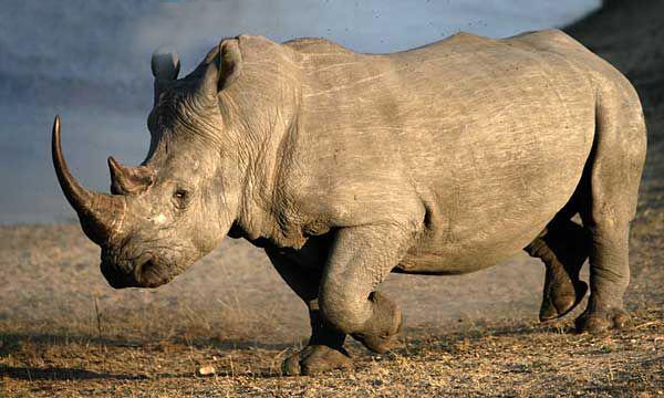rhino_ep-6467_result