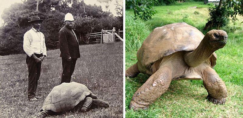 182-year-old-tortoise-jonathan-151