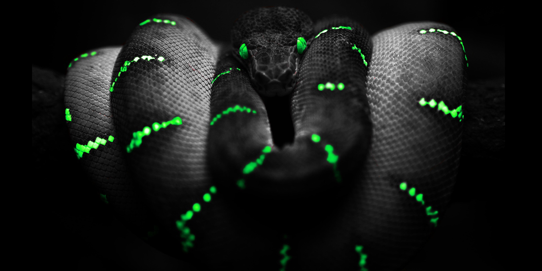 Jinn Snake
