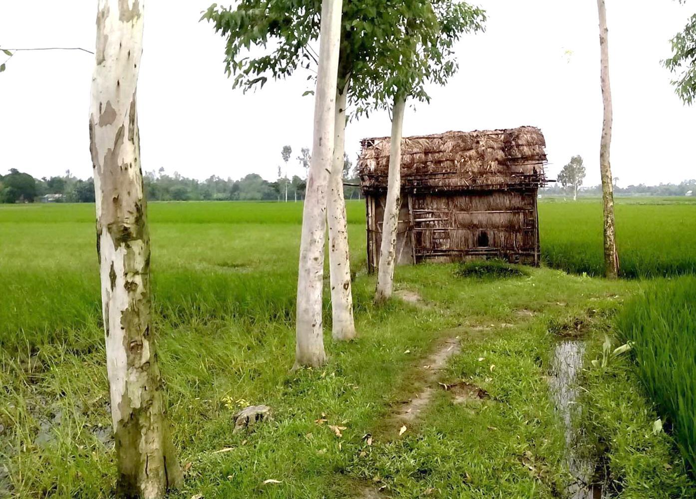 Photo (Tree) Mithapukur,