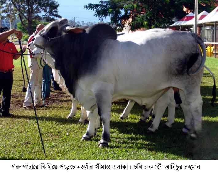 Pic Simantor Naogaon 09.09.15