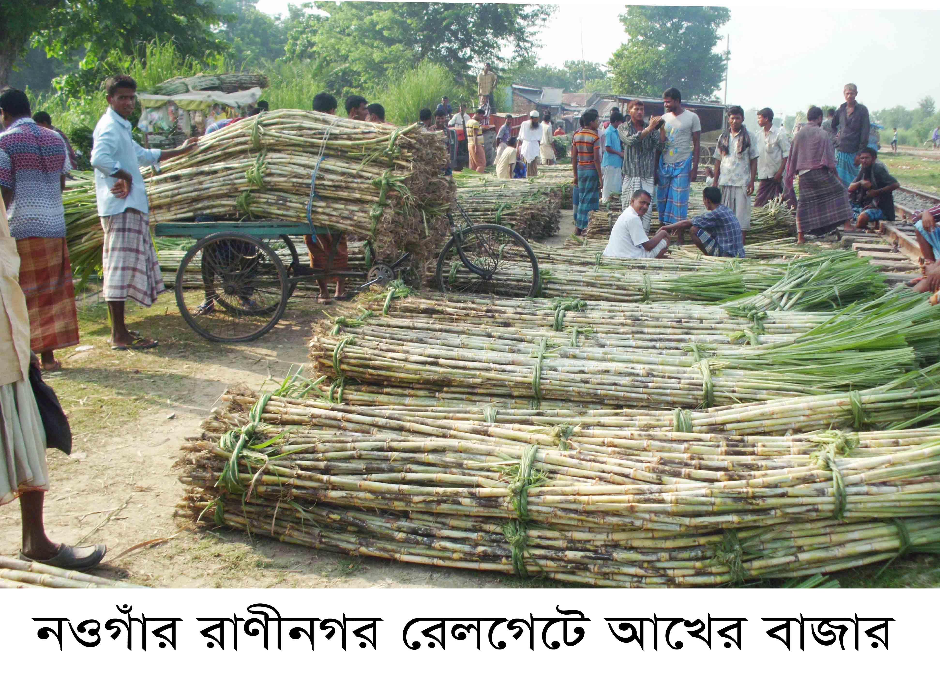 Raninagar Sugar Can Bazar Pic