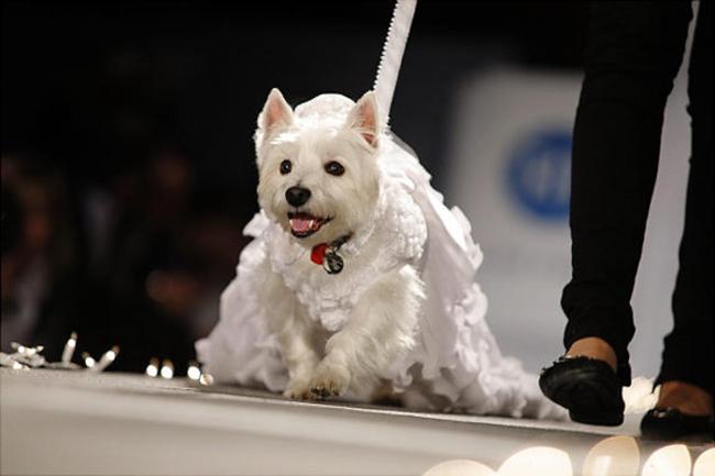 gal-dog-costumes-01-jpg