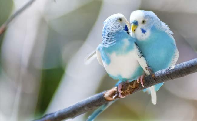 jakia..bird_83615
