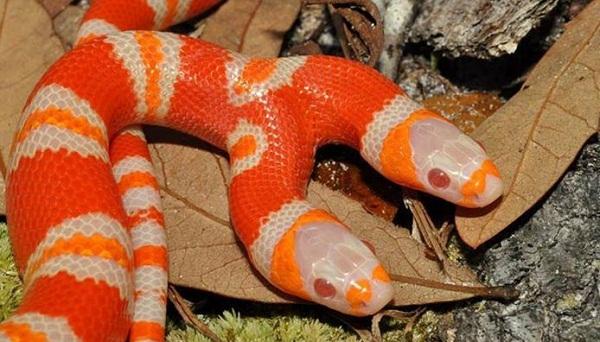 snake_bg_469185491