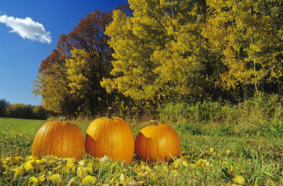 pumpkins and autumn foliage, near St. Adolphe, Manitoba, Canada.