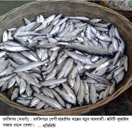 Raninagar Fish Pic 31.10.2015