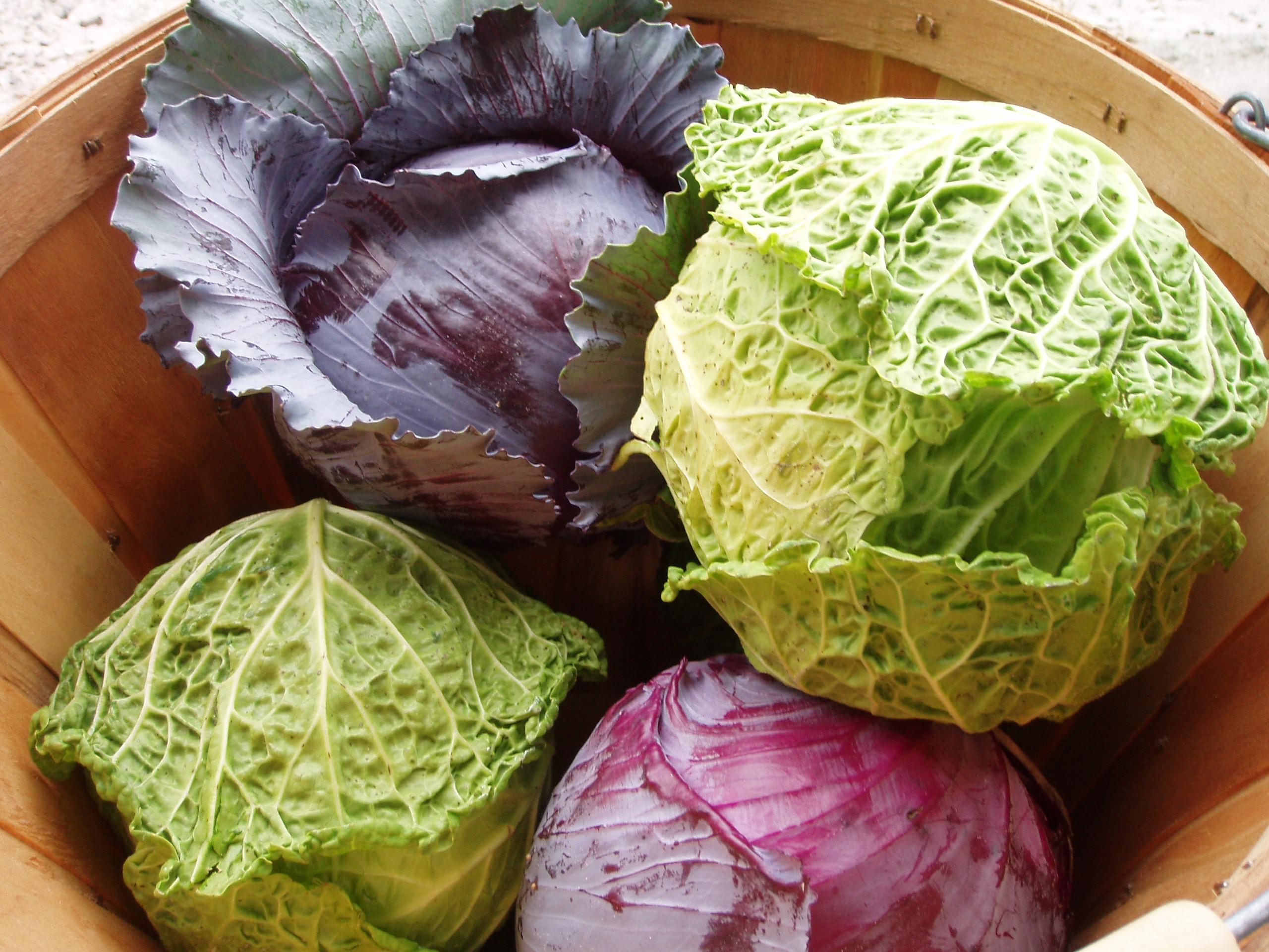 Cabbage_0