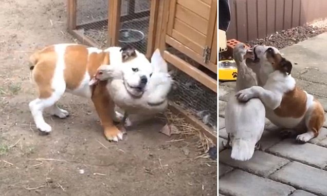 duck and puppy form the most unlikely friendship pic_93380