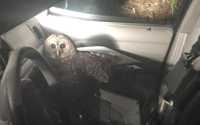 owl1451183884