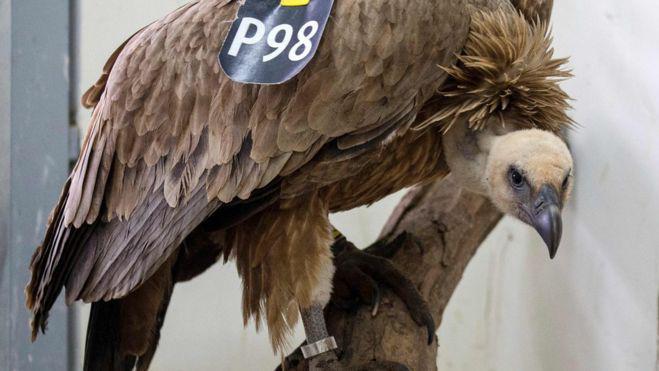 vulture_100473