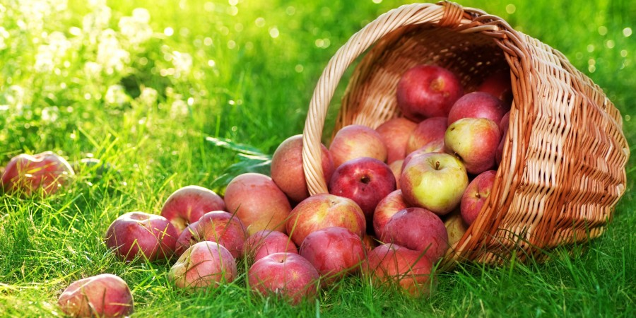 Download-Apple-Wallpaper-Basket-Image-Greenland-Picture_0