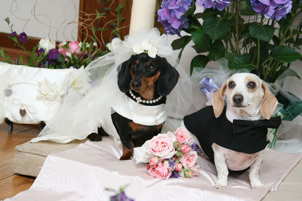 dog-wedding_105408