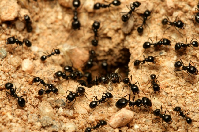 how_to_prevent_an_ant_infestation_in_your_home