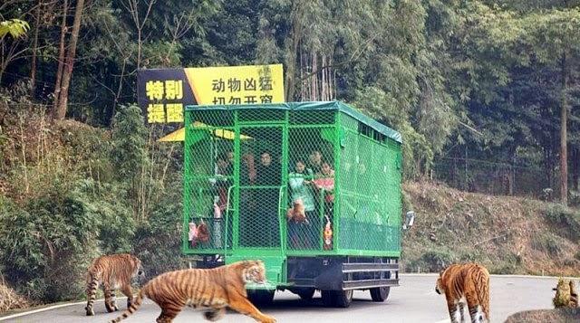 lehe-ledu-wildlife-zoo-china-1