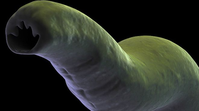parasitos_hookworm_2_640x360_thinkstock_nocredit