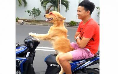 Dog1460976606