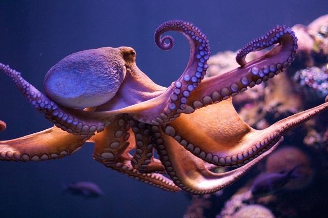 Octopus-1024x680