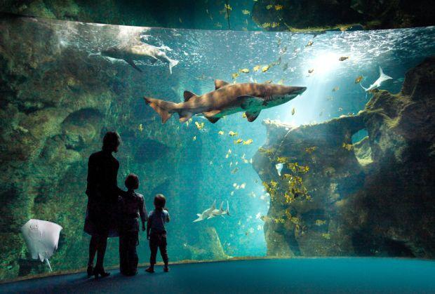 World's-Most-Amazing-Aquariums-11