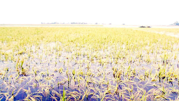 tahirpur sunamgonj news pic-17,04,1