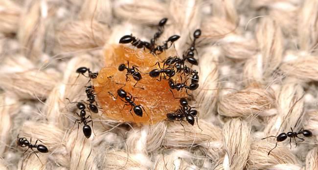 011916_wild-things_ants_free