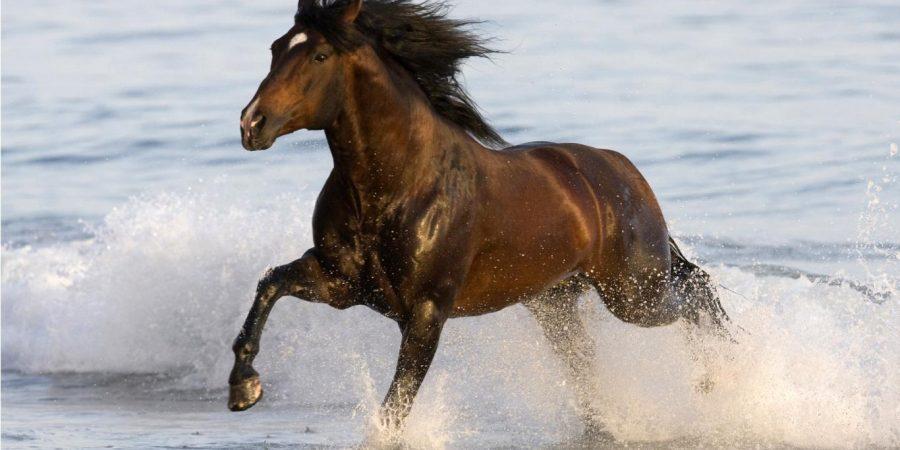 373545-beautiful-free-horse