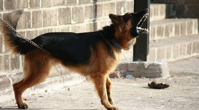 Barking-dog-810x476