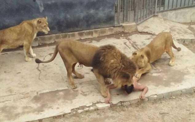 jakia..lion 2_113703_2