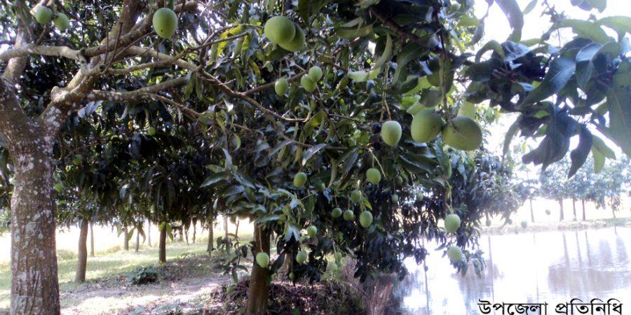 mango news gopal 3