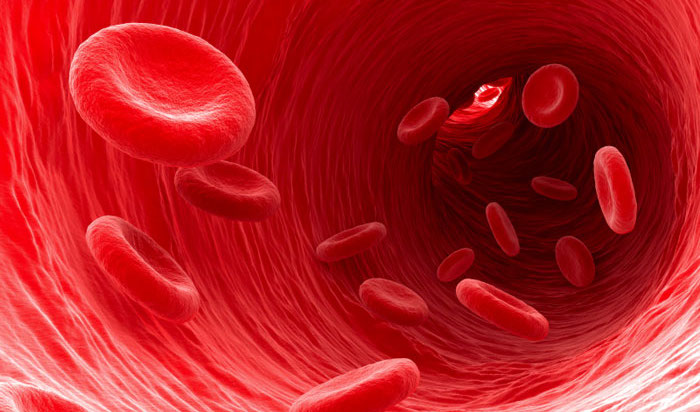 red-blood-cells-1